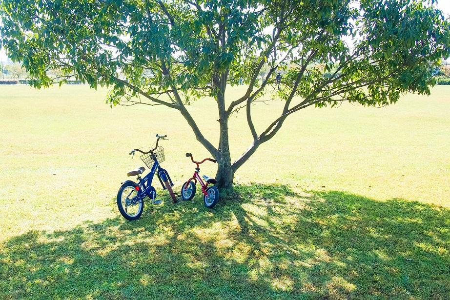 木の下に自転車を置いている写真